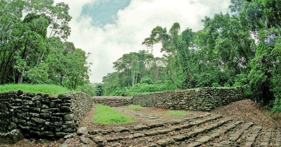 un camino de piedras en medio de un amplio bosque verde