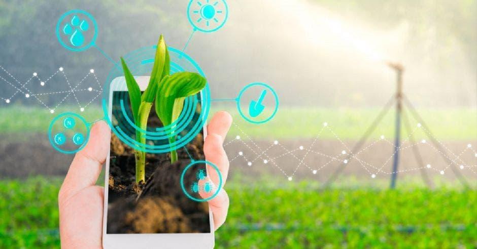 una persona sostiene un celular en medio de un campo verde. Concepto de biotecnología.