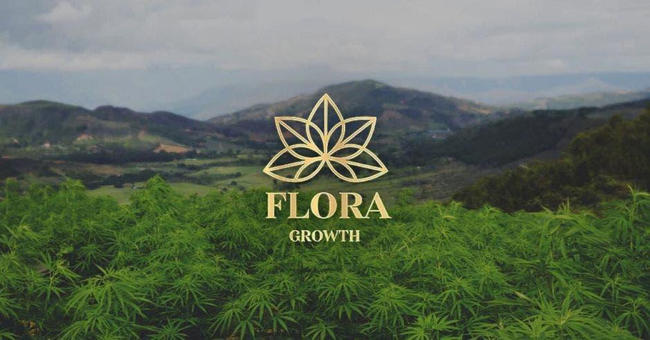 un logo de plantas sobre un fondo de plantación de cannabis. La palabra Flora Growth con detalles en dorado,