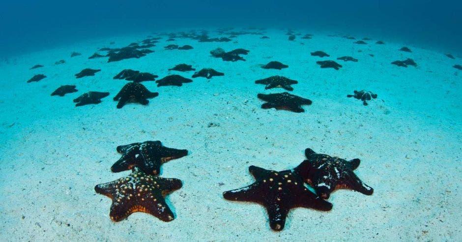 Un conjunto de estrellas de mar en el fondo marino