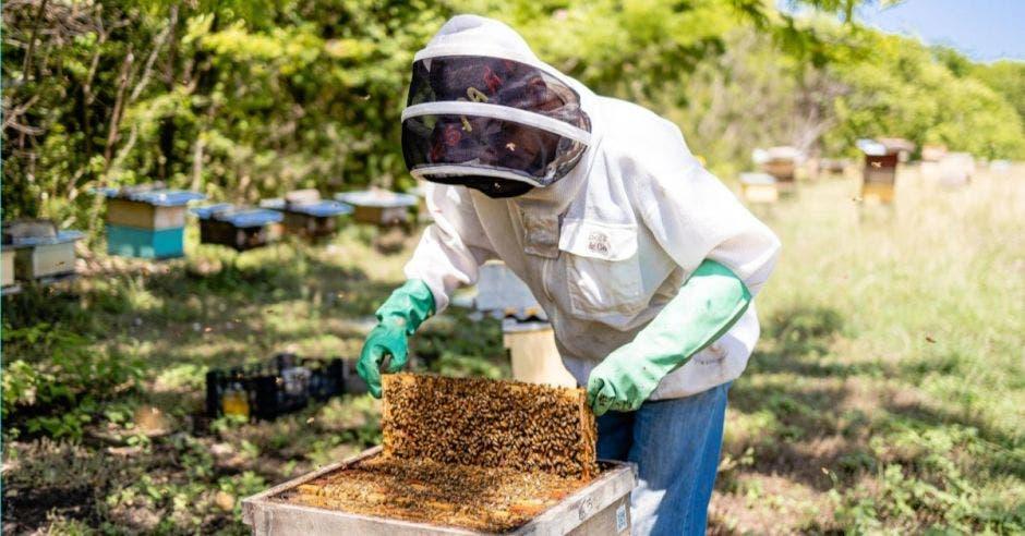 Hombre trabajando en apiario
