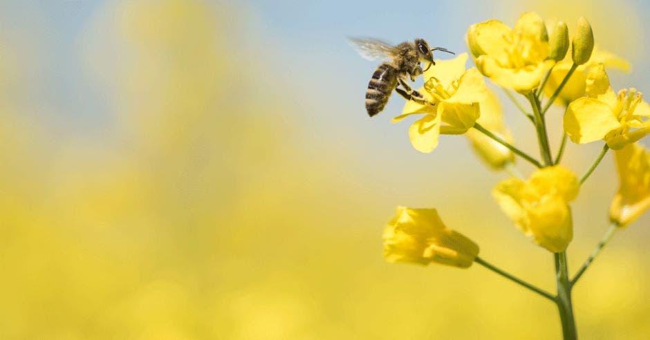 una abeja come de una flor