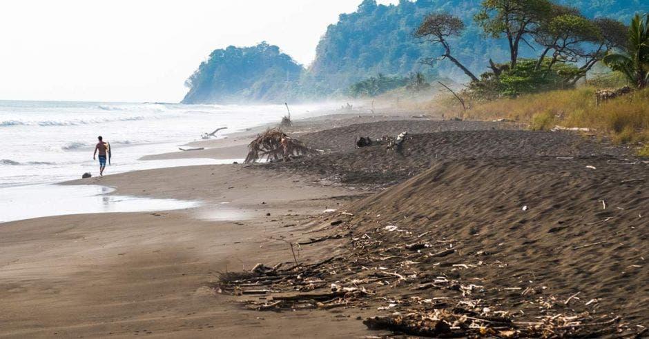 una playa oscura con restos de troncos en la costa
