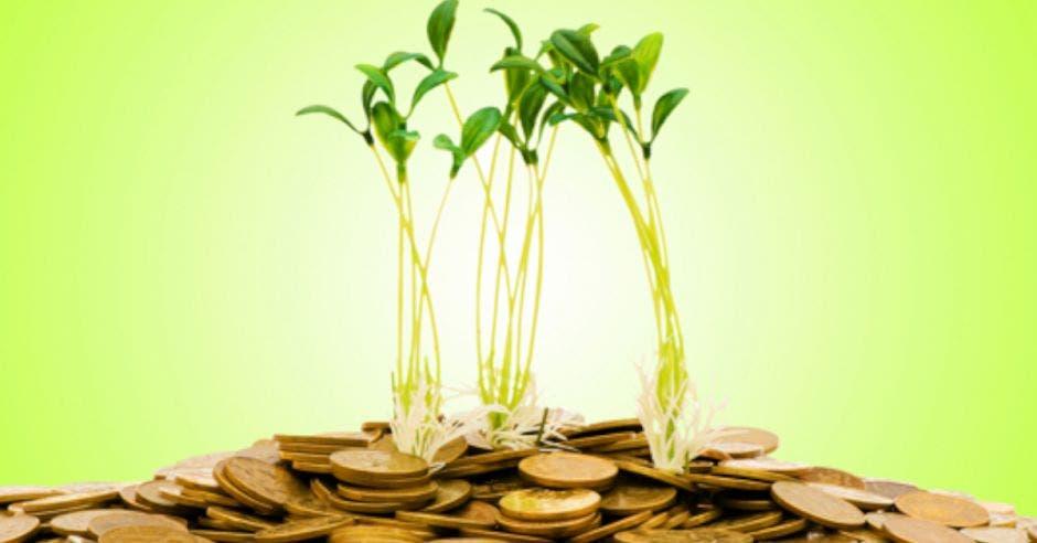 monedas doradas y plantas con tallos encima