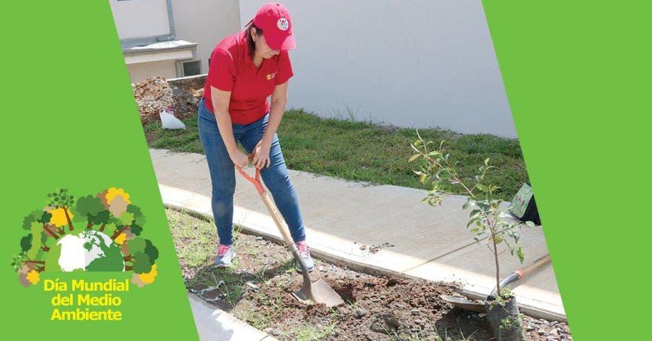Mujer trabajando en sembrar un árbol