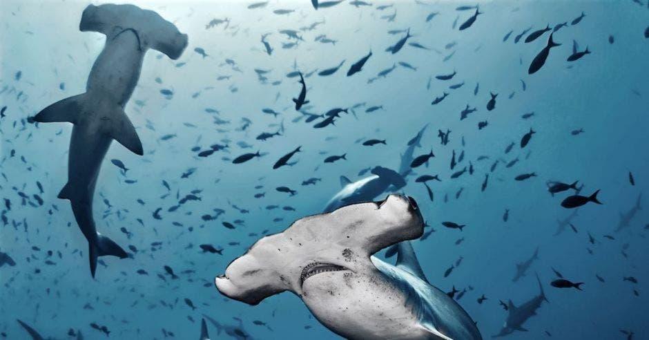 muchos tiburones nadando en el agua