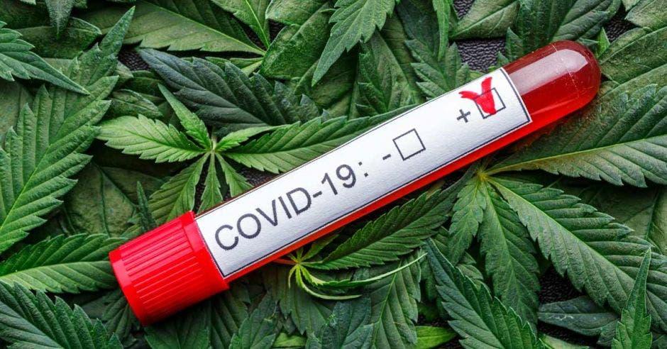 Muestra de sangre infectada en el tubo de muestra, Productos de cannabis surtidos, píldoras y aceite de cbd - concepto médico de marihuana, medicina alternativa de hierbas