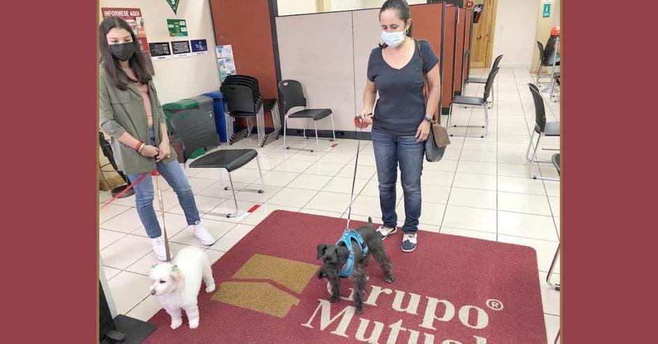 Dos perros en la alfombra en la entrada de una sucursal de Grupo Mutual