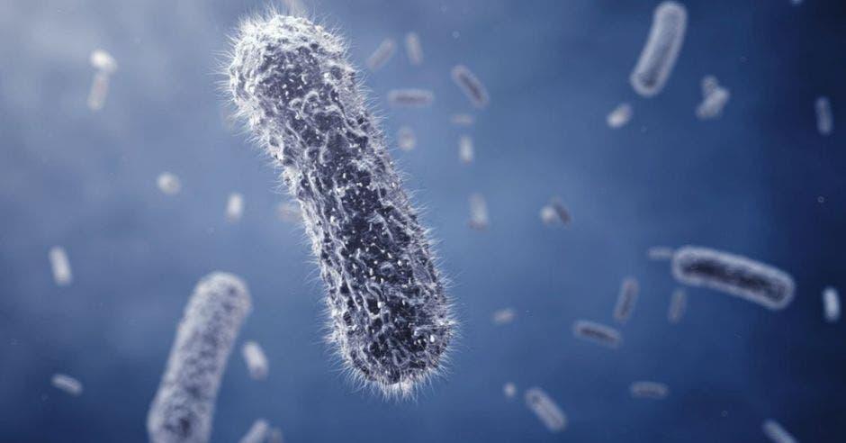 foto de un virus