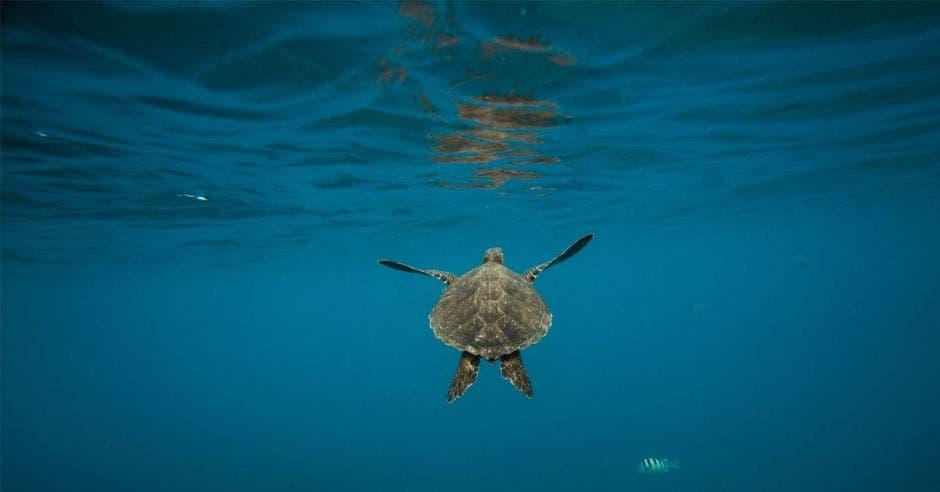 una tortuga nadando en el fondo marino