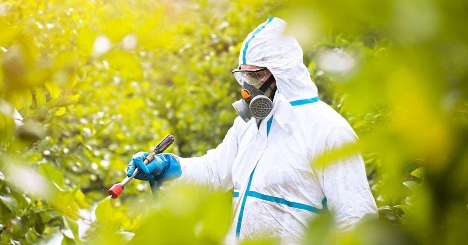 Plaguicida ecológico aplicado en cultivos