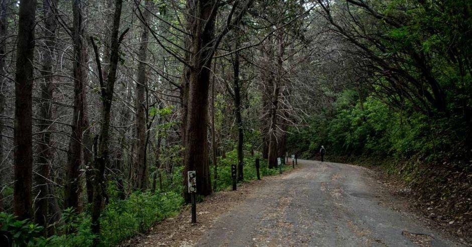 árboles secos alrededor de una calle pavimentada
