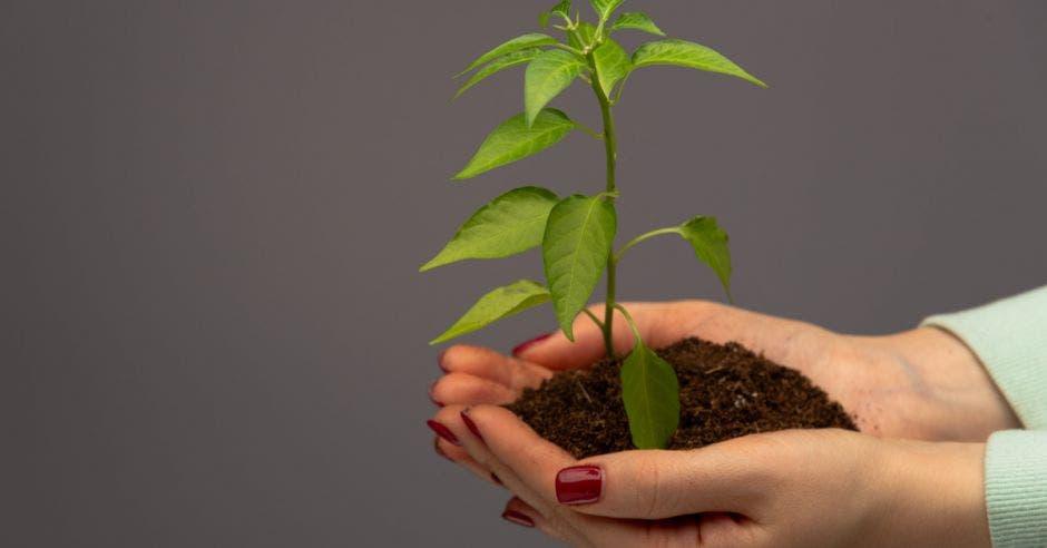 una planta sembrada en la mano de una persona. La mano es de una mujer con las uñas pintadas.