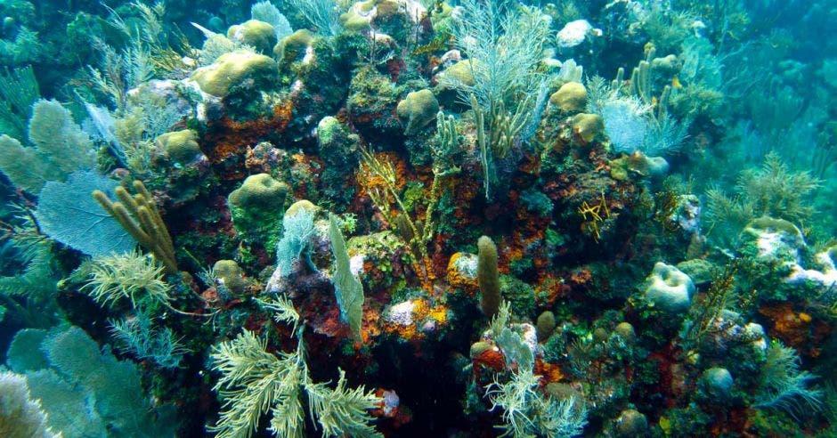 corales en el fondo marino