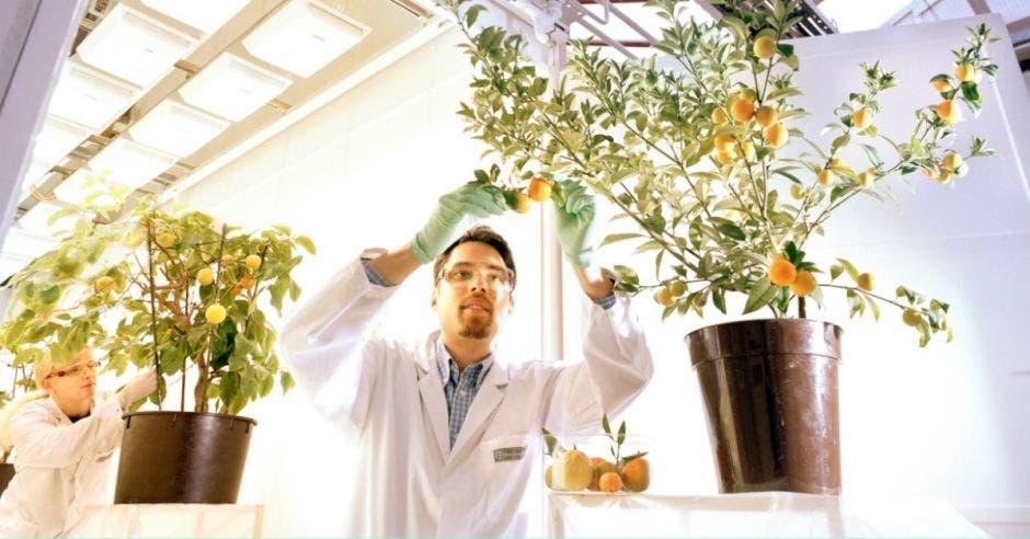 Científico trabajando con plantas