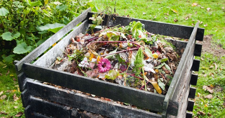 residuos orgánicos en una caja de madera color negro