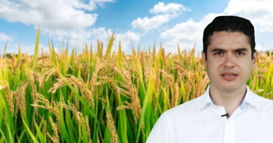 un hombre sonriendo sobre un campo de arroz
