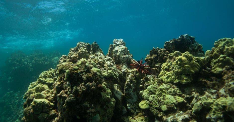 Arrecife subacuático de rocas en el océano tropical