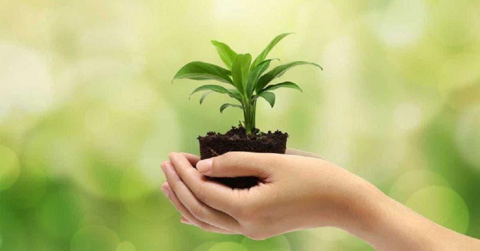 una mano sostiene un poco de tierra con una planta sembrada sobre ella