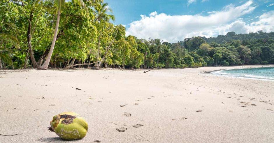 una pipa verde en medio de una playa