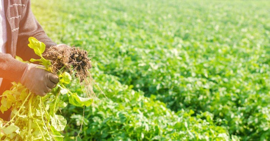 Agricultor en el campo