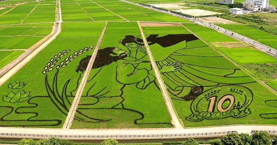 juegos olímpicos arroz campos