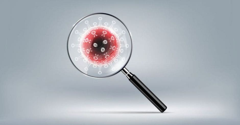 un lupa frente al virus Covid-19