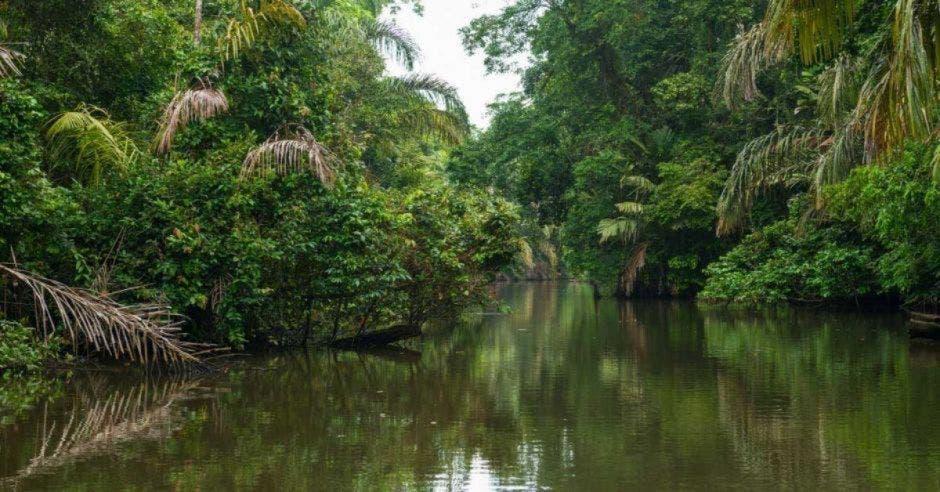 Humedal y vegetación en jungla.