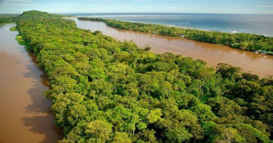 vegetación selvática y canales de río