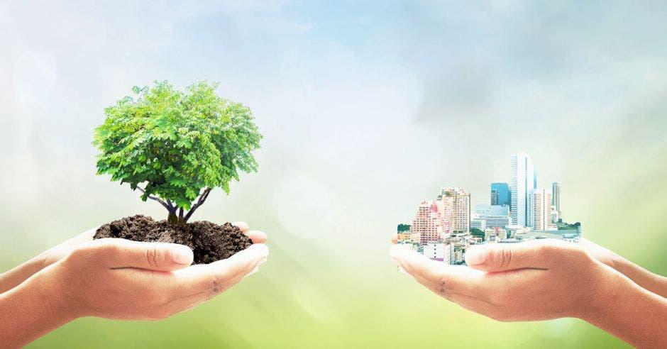Dos manos, una sosteniendo una construcción y la otra un árbol