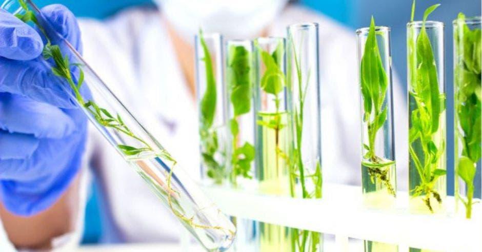científica con tubos de ensayo con plantitas